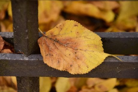 tree, leaf, nature, wood, metal, wrought, fence, plant, autumn