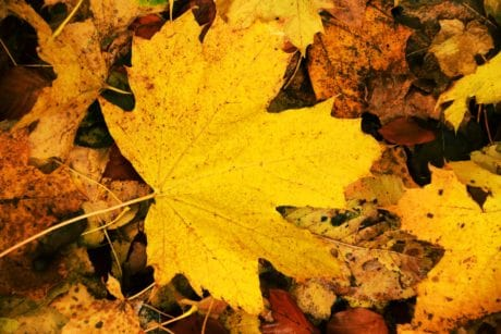 wood, flora, ground, yellow leaf, nature, autumn, foliage