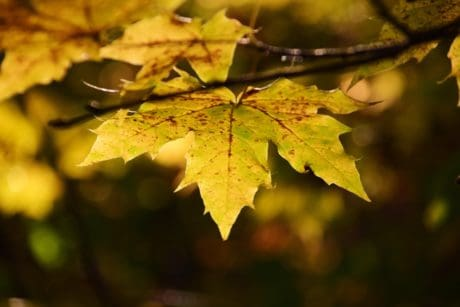 nature, tree, flora, leaf, autumn, forest