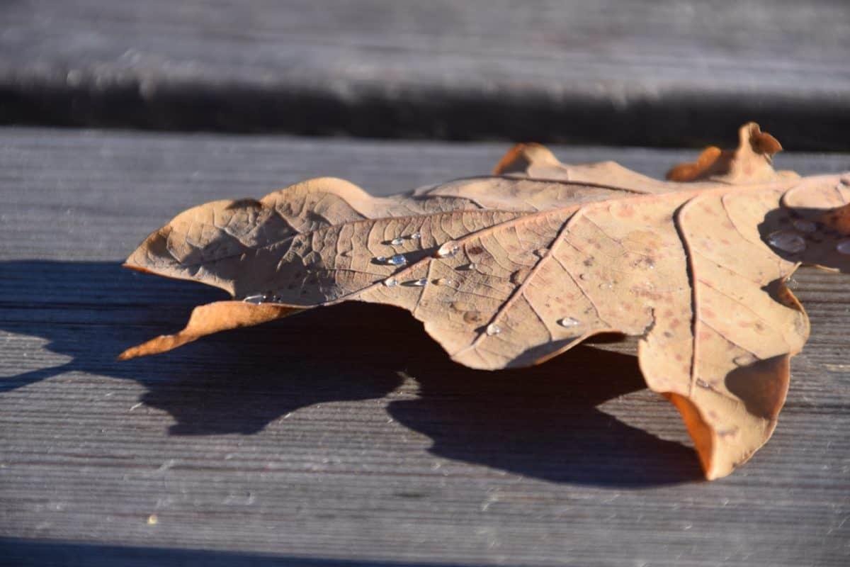 secco, foglia, legno, tavolo, autunno