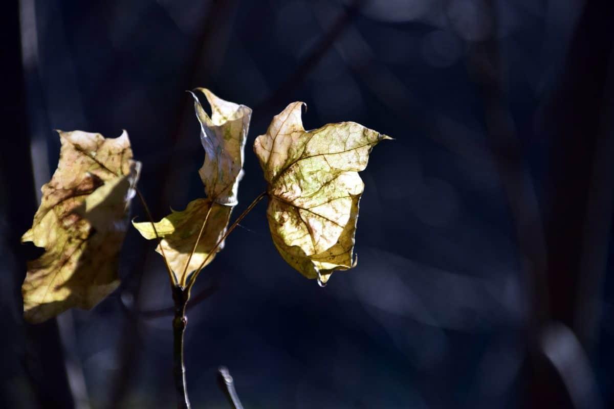 natura, flora, foglia, albero, pianta