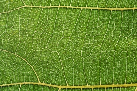 flora, green leaf, pattern, detail, macro