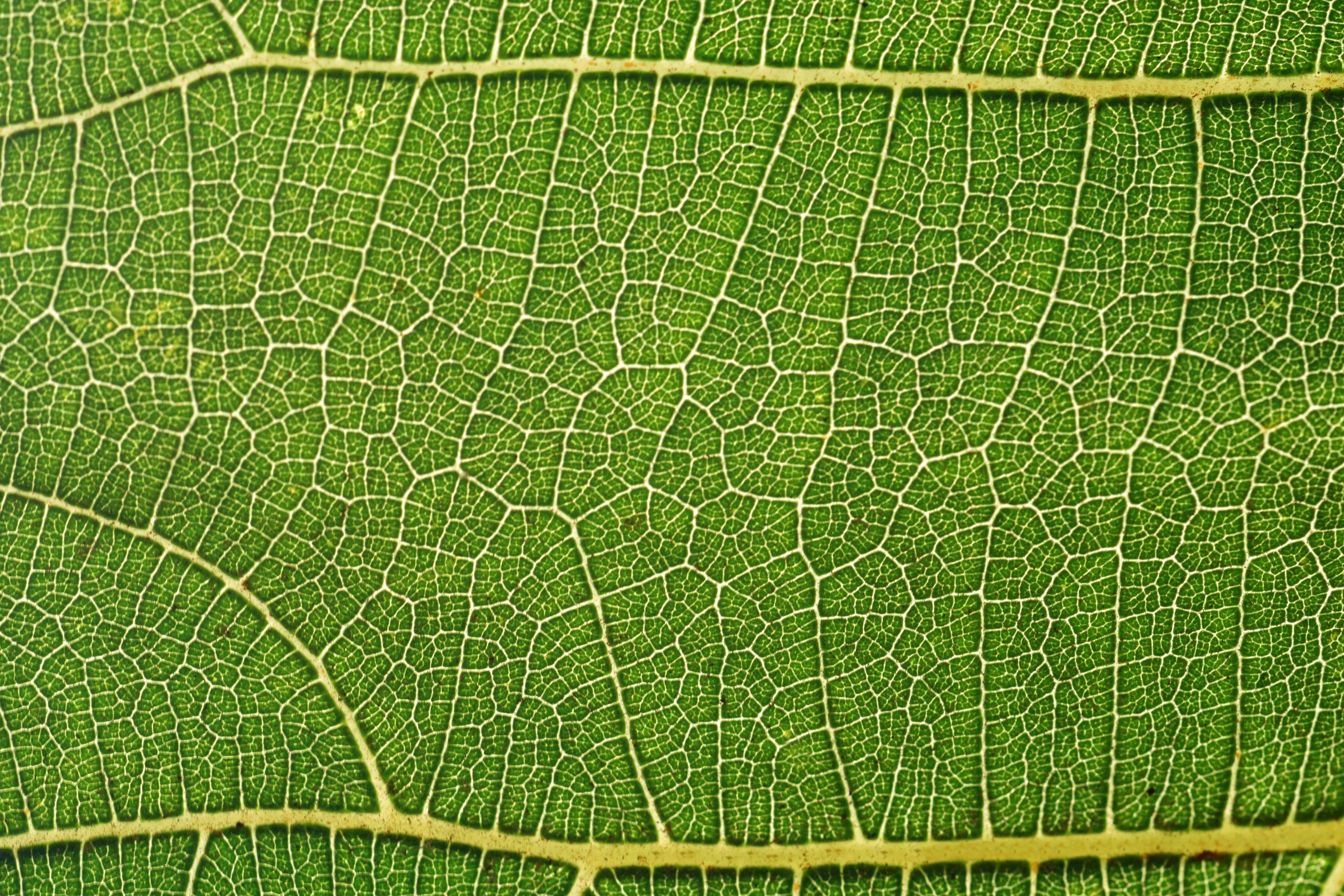 Imagen gratis: flora, hoja verde, patrón, detalles, macro