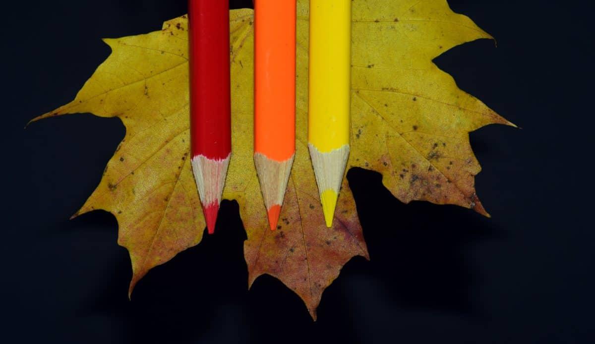 bois, feuille, crayon, ombre noire, automne, couleurs, décoration,