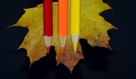 Holz, Blätter, Bleistift, Herbst, bunt, Dekoration, Schatten