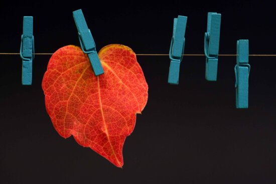 red leaf, rope, autumn, nature, plant