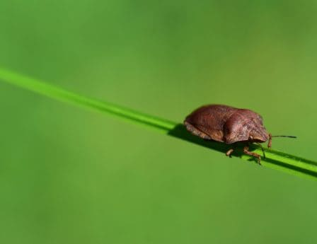 pest, macro, nature, insect, beetle, biology, invertebrate