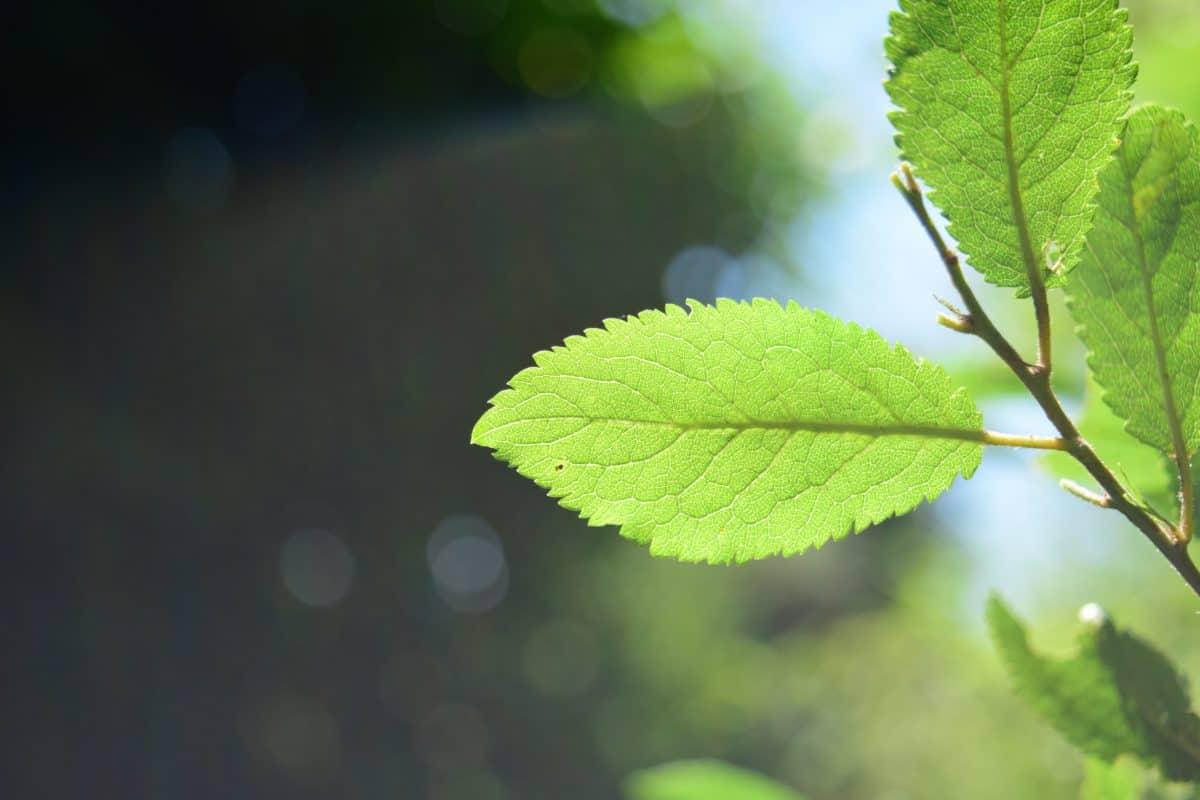 foglia, natura, flora, albero, pianta, erba, fogliame