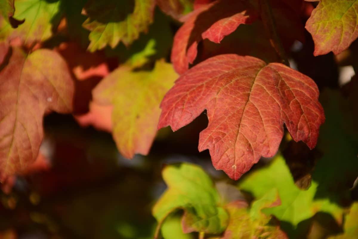 flore, feuille, nature, automne, plante, feuillage, forêt