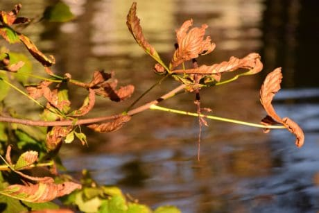 water, leaf, nature, tree, plant, branch, river,autumn