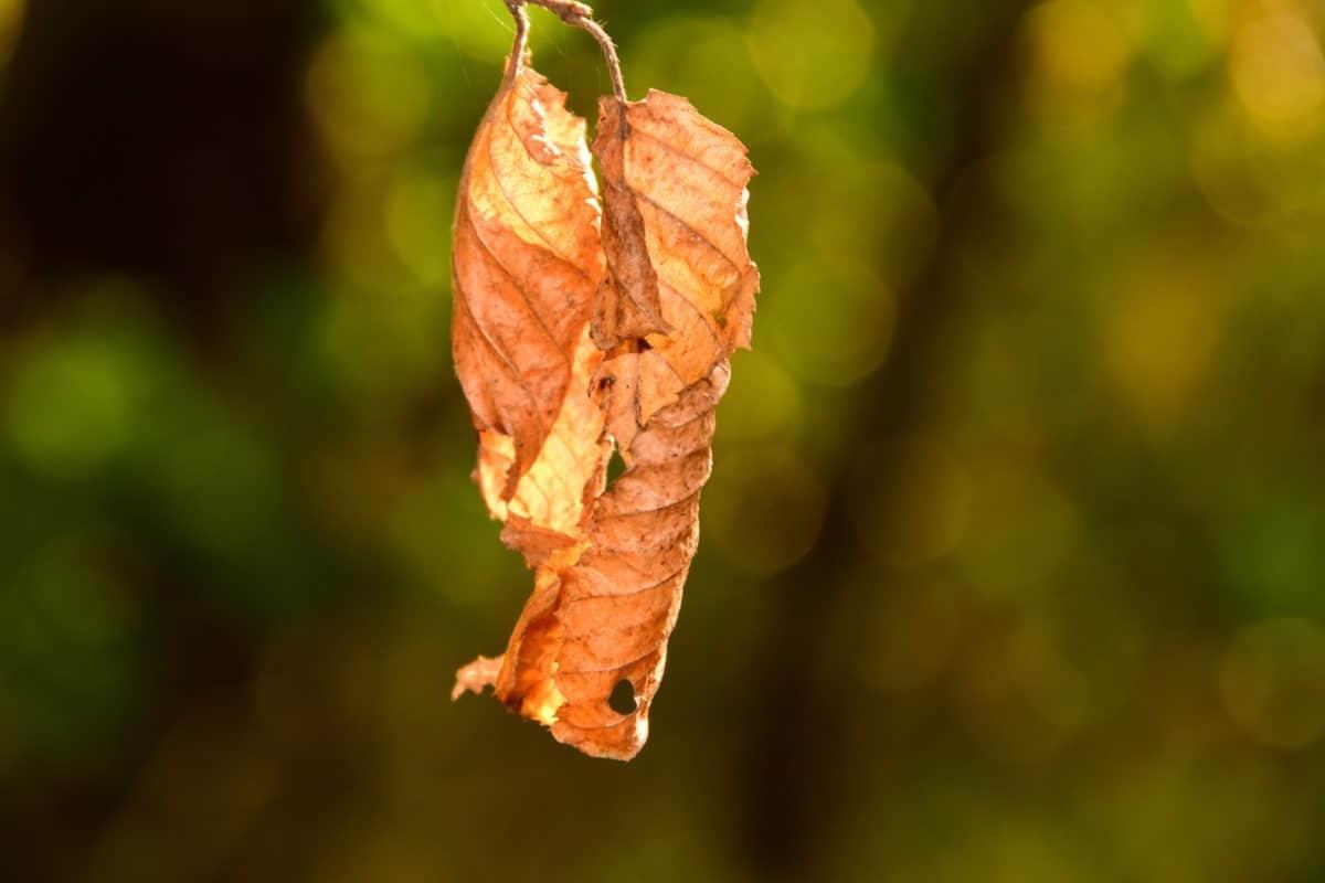 madera, bosque, mesa, hojas secas, otoño,