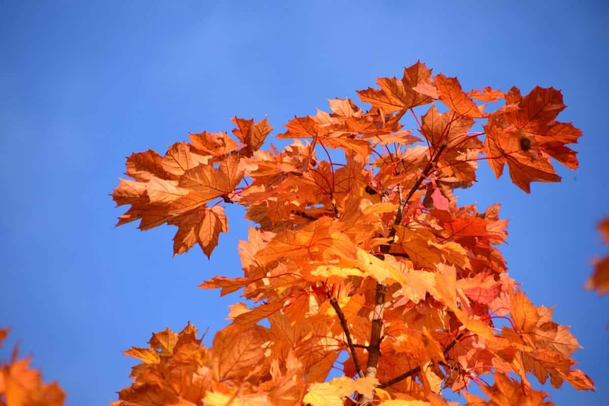 Blatt, Natur, Baum, Herbst, Pflanze, Wald, Laub