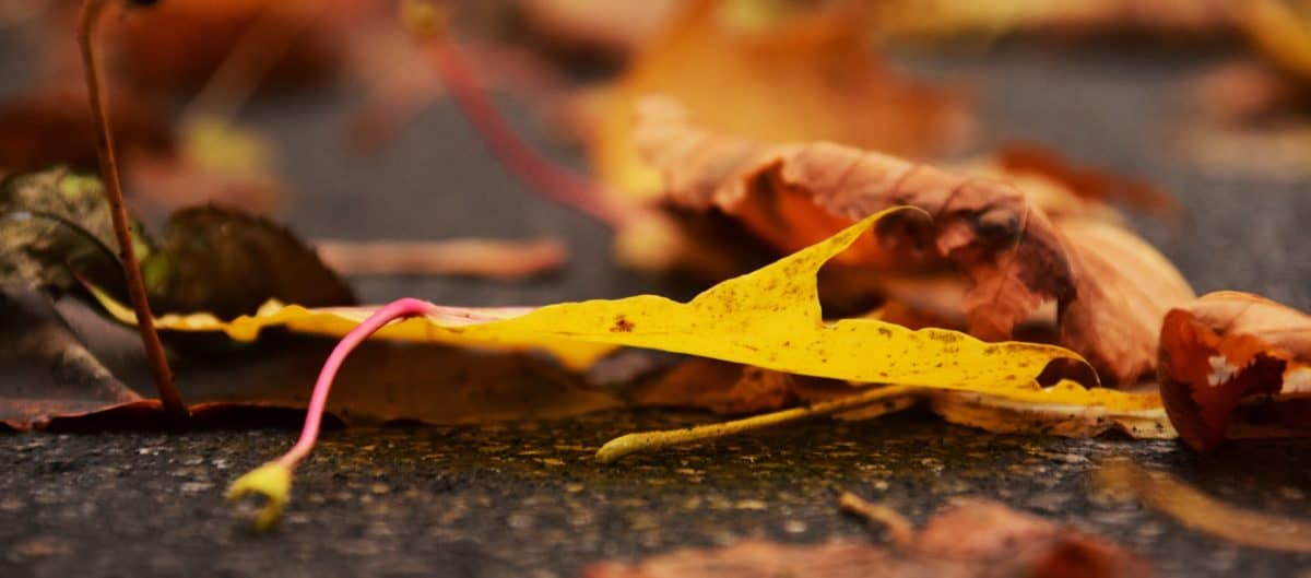 Blatt, Holz, Herbst, Baum