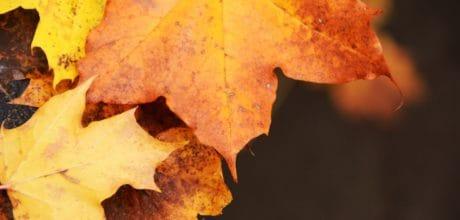 secar la hoja, naturaleza, macro, bosque del otoño, marrón,