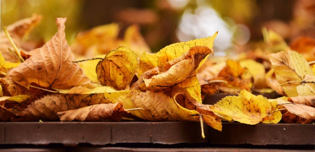 tavolo in legno, autunno, a secco, foglia