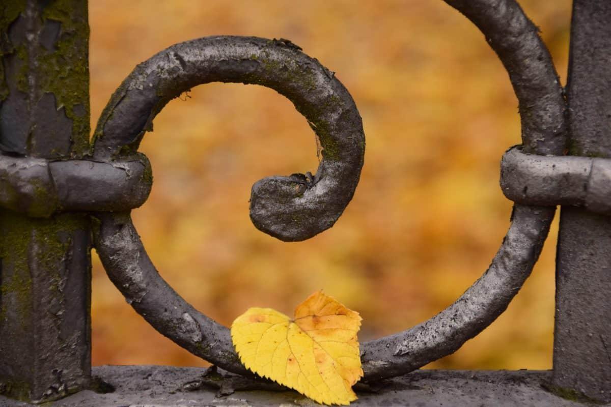 inoxidable, hierro, metal, viejo, gancho, bosque, hoja, otoño