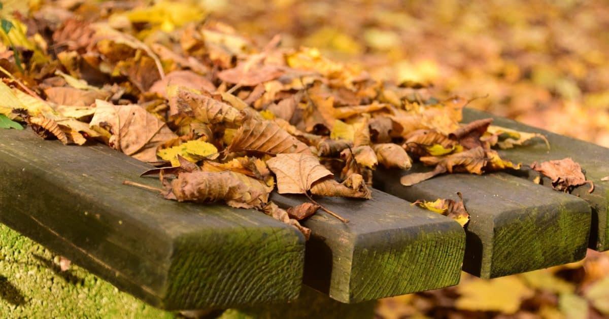 natura, foglia, cibo, legno, erba