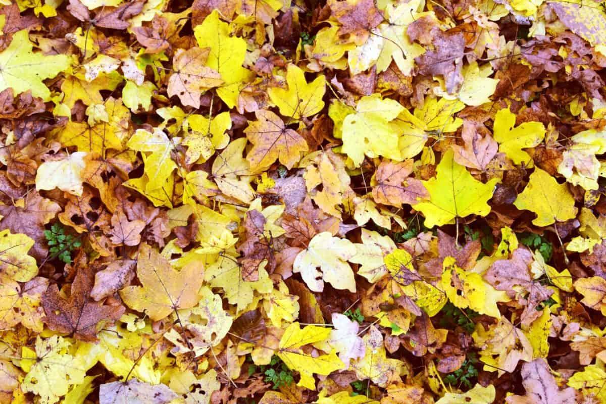 Textur, Blatt, Flora, Natur, Boden, Pflanze, Herbst, Kraut