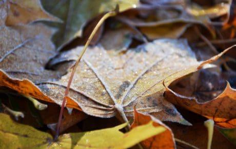 seco, bosque, naturaleza, hoja, otoño, amarillo