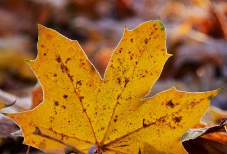 nature, leaf, macro, daylight, yellow leaf, autumn, foliage, plant