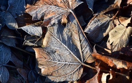 nature, leaf, wood, flora, brown, macro, environment