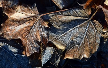 flora, nature, winter, environment, maco, leaf, detail