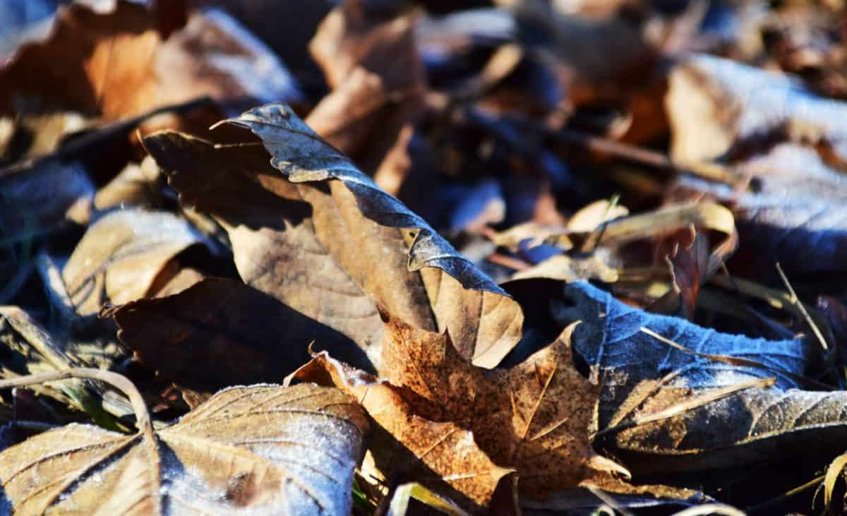 seco, bosque, naturaleza, hoja, otoño