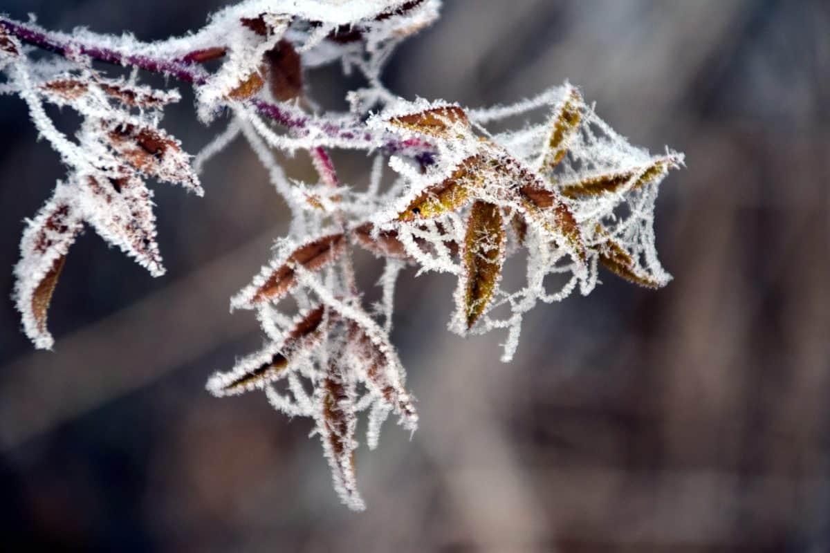 hiver, nature, gel, arbre, feuille