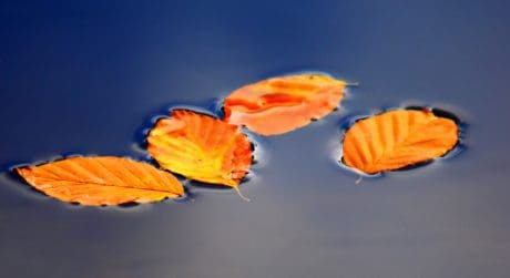 surface, leaf, water, outdoor, nature, autumn, reflection