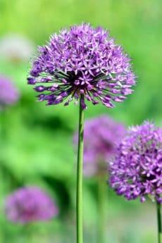 sauvage, flore, été, fleurs sauvages, feuille, jardin, macro, nature