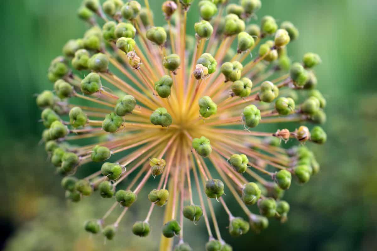 fleur, nature, flore, plante, herbe, macro, lumière du jour, vert