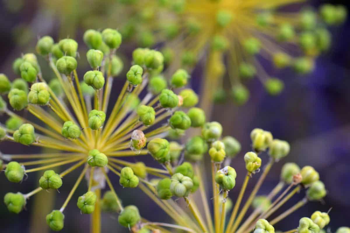 flore, jardin, fleurs sauvages, nature, herbe, plante, vert