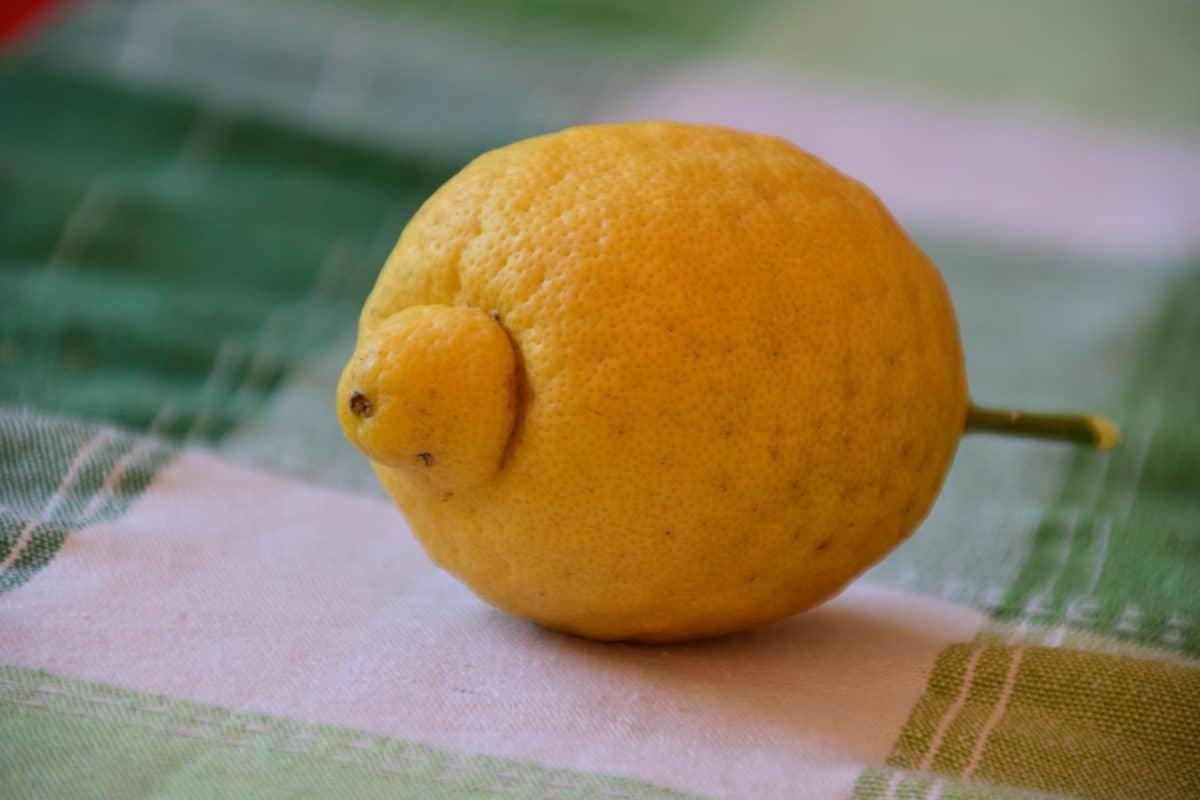 fruit, nourriture, citron, agrumes, vitamine, alimentation, macro