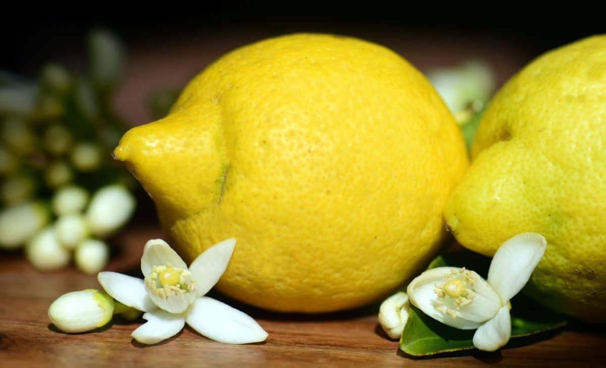 fruta, comida, limón, cítricos, dieta, vitaminas, macro