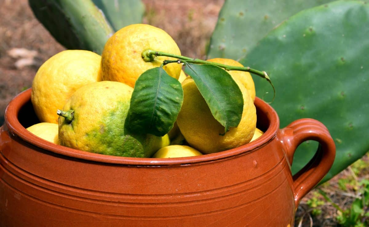 food, leaf, lemon, ceramic, citrus, fruit, vitamin, diet, plant