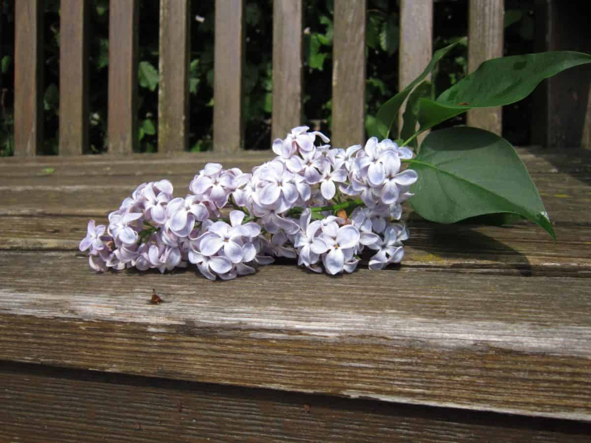naturaleza muerta, hoja verde, muebles, flores, madera, flora, jardín, naturaleza