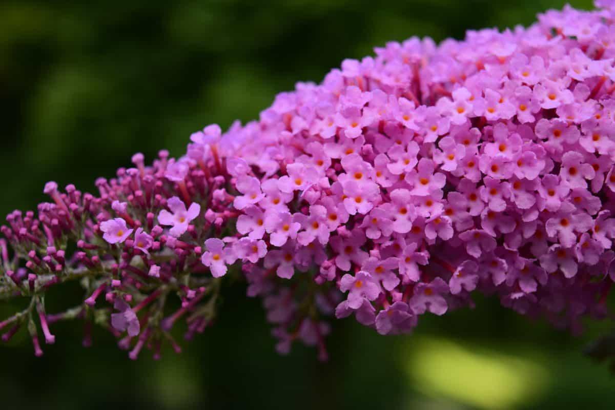 Flora, Natur, Blume, Pflanze, Blüte, Garten