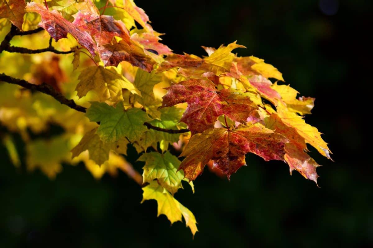 Flora, Blatt, Natur, Herbst, Baum, Laub, Wald, Pflanze
