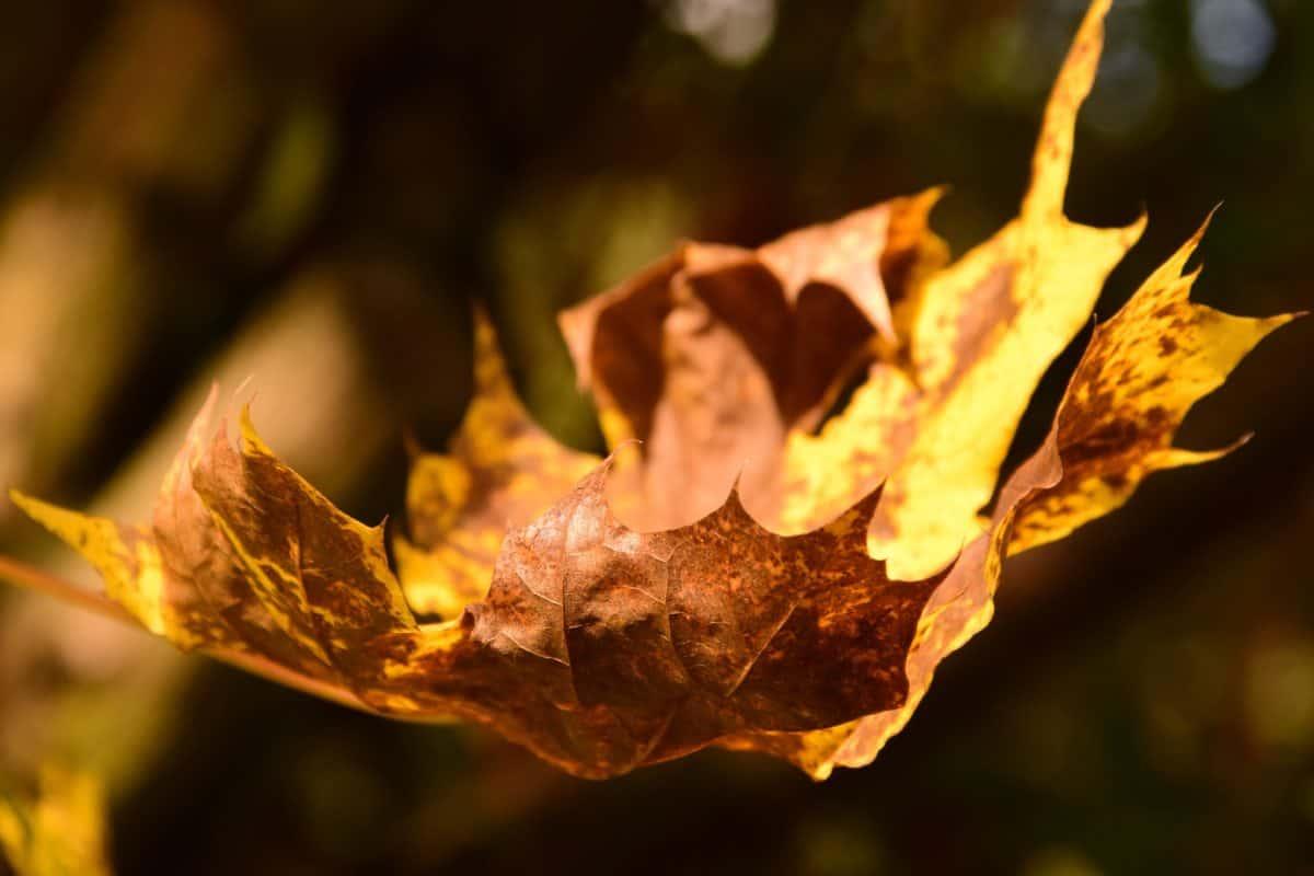 flora, hoja, naturaleza, secar madera hoja, marrón,