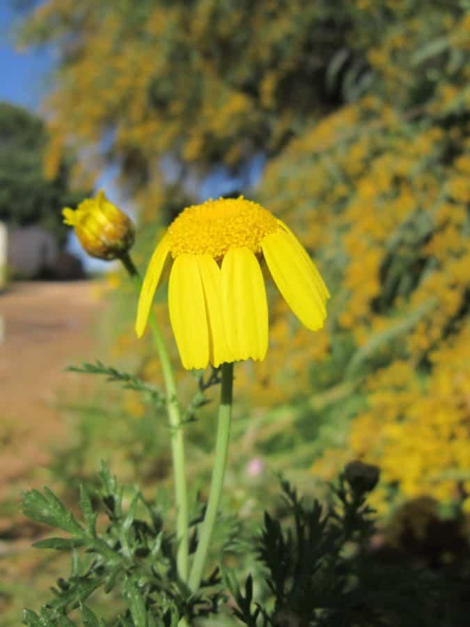 flora, flor silvestre, verano, naturaleza, planta, hierba, jardín
