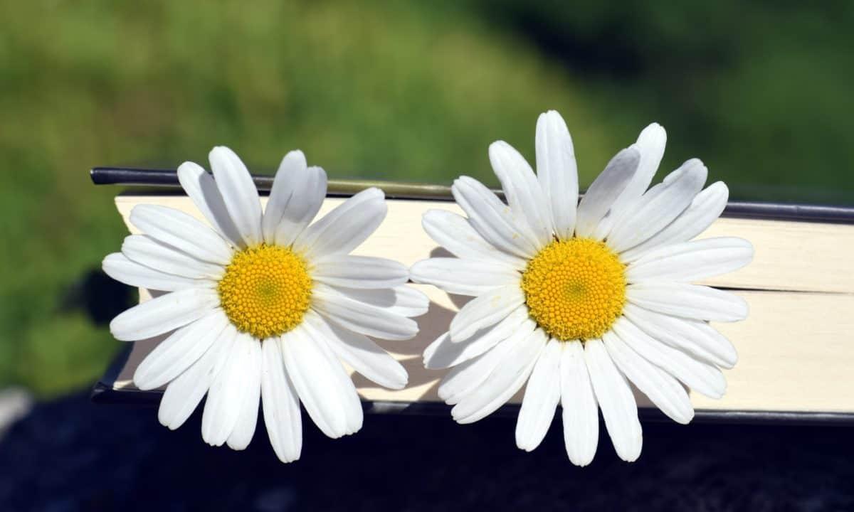 still life, macro, nature, flora, flower, summer, plant, blossom, garden, petal
