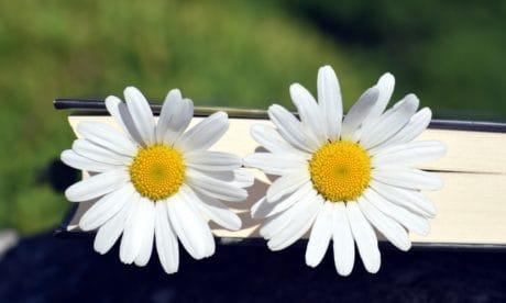 natures mortes, macro, nature, flore, fleurs, été, plante, fleur, jardin, pétale