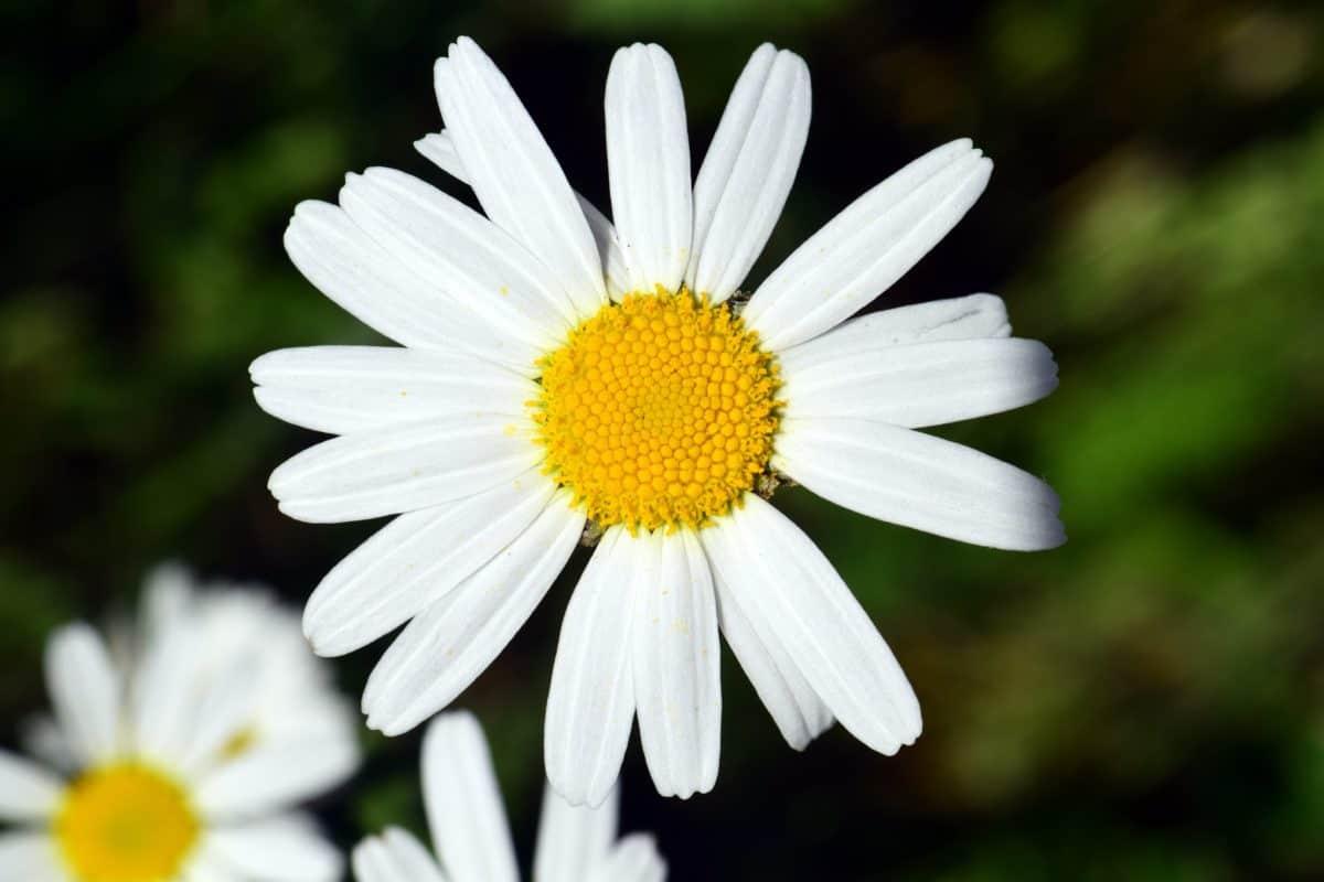 pollen, summer, flora, nature, flower, plant, blossom, garden, petal