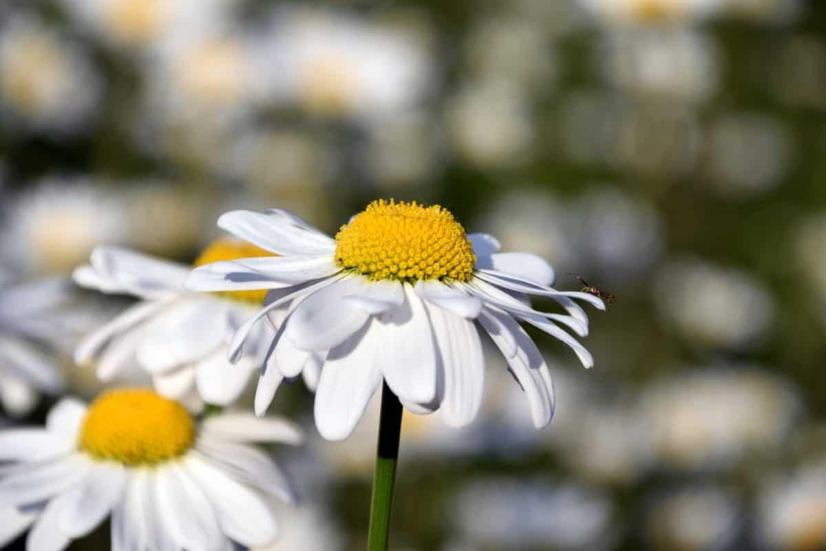 estate, natura, macro, fiori selvatici, flora, erba, pianta, fiore, giardino