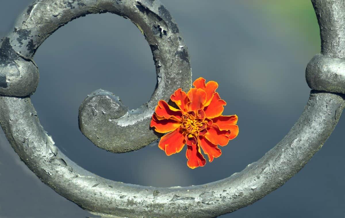 flower, metal, iron, art, decoration, still life