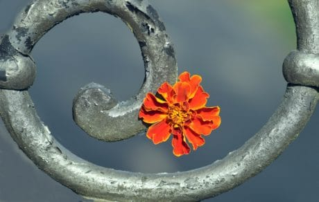 flower, metal, iron, art, decoration, still life