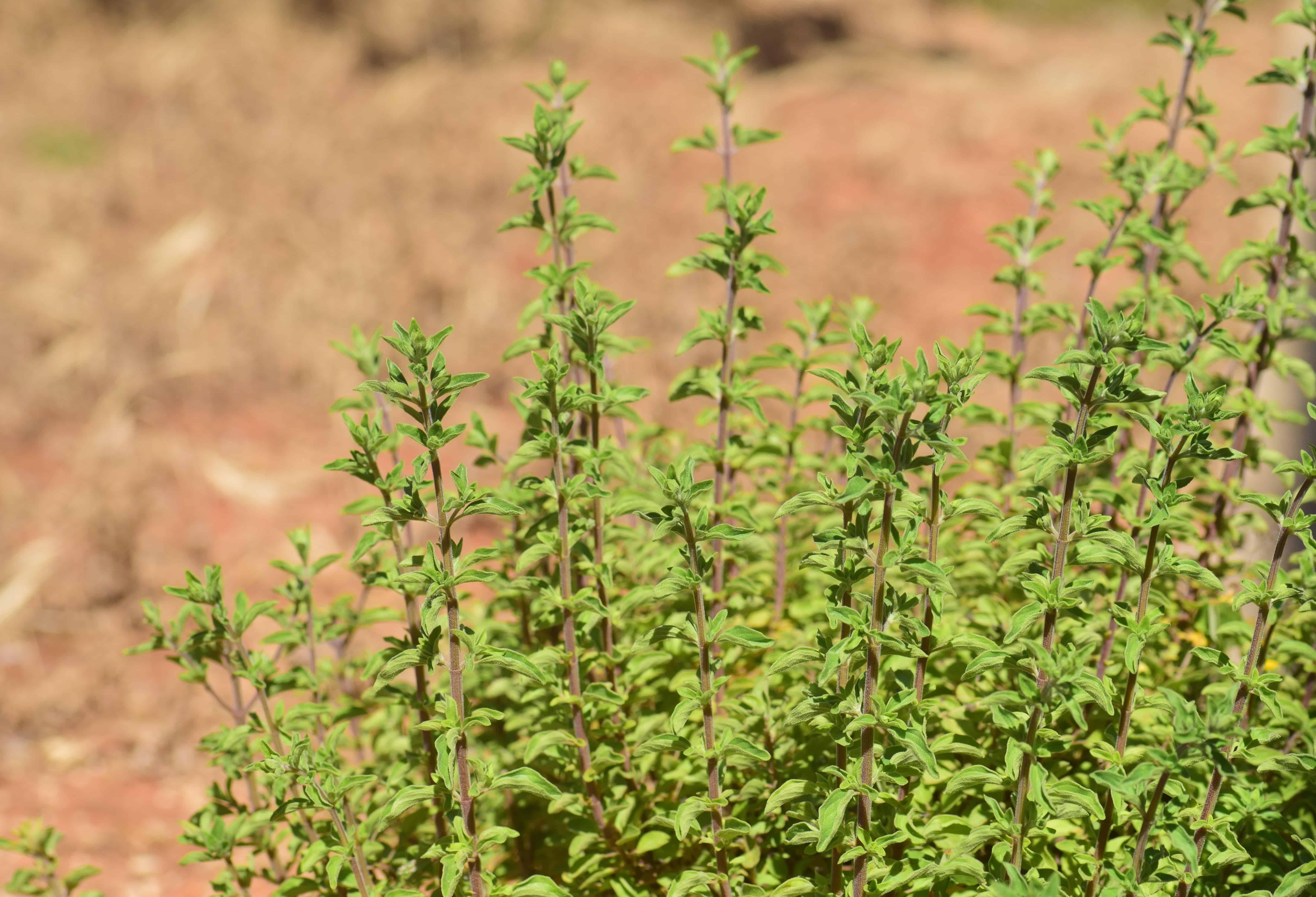 plante gazon best plante gazon with plante gazon re quelle plante pour un beau gazon dans son. Black Bedroom Furniture Sets. Home Design Ideas