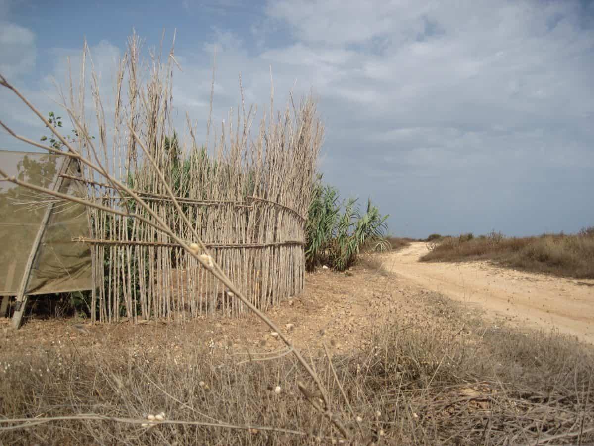 Road, vidéki, ég, természet, mezőgazdaság, táj, fa, mező, növény