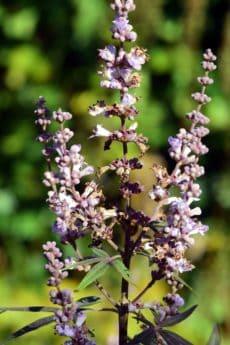 Blume, Natur, Flora, Blatt, Sommer, Garten, Pflanze, Kraut