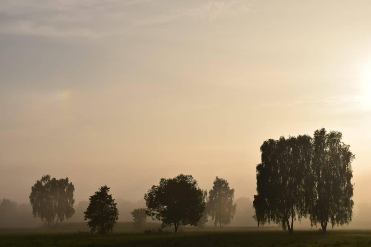 sun, tree, sky, sunset, fog, landscape, nature